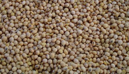 CESFAC trazará el mapa de la soja sostenible en España